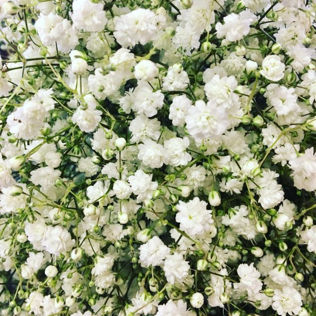 gypsophila wedding weddinginspiration weddingsofinstagram weddingfloristnorthampton northamptonshirewedding whitewedding bride flowerlove flowershellip